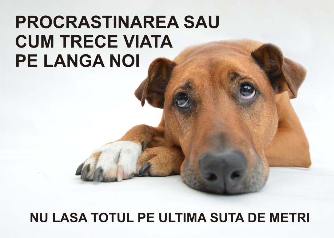 6.Minimalist in Romania - Procrastinarea sau cum trece viata pe langa noi